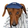 New York Yankee Hotdog by Susan Candelario