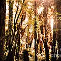 New Zealand Bush by Lydia Holly