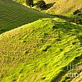 New Zealand Farmland by Louise Heusinkveld