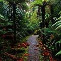 New Zealand Rainforest by Amanda Stadther