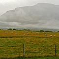 New Zealand Sheep Farm by Stuart Litoff