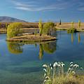 New Zealand, South Island, Mackenzie by David Wall