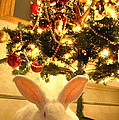 New Zealand White Rabbit Under The Christmas Tree by Amanda Stadther