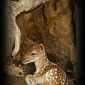 Newborn Fawn by Sara  Raber