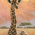 Newborn Giraffe by Lucie Bilodeau