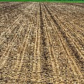 Newly Planted 14564 by Jerry Sodorff
