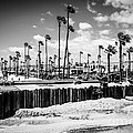Newport Beach Dory Fishing Fleet Black And White Picture by Paul Velgos