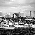 Newport Beach Skyline Black And White Picture by Paul Velgos