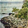 Newport Cliff Walk by Julia Springer