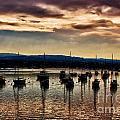 Newport Harbor At Dusk by Stefan H Unger
