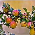 Nice Apples  by Stefan Pettersson