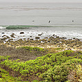 Nicholas Canyon County Beach by Ricky Barnard