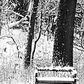 Nichols Arboretum by Phil Perkins