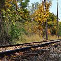 Nickel Plate Train Tracks by Amy Lucid