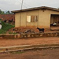Nigerian House by Amy Hosp