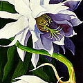 Night Blooming Cereus by Janis Grau