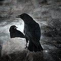 Mysterious Night Crows by Gothicrow Images