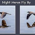 Night Heron by Nancy L Marshall