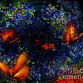 Night Of The Butterflies by Olga Hamilton