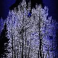 Night Of The Wolf by Gary Benson