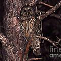 Night Owl by Al Powell Photography USA