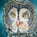Night Owl by Karen Lipek