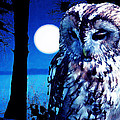 Night Owl by Neil Finnemore