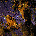Night Owls by Phil Penne