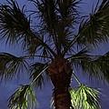 Night Sky Through The Palm by Zina Stromberg