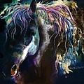Night Stallion by Sherry Shipley