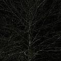 Night Tree by Joseph Yarbrough