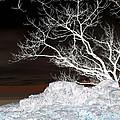 Nightfall Negative by Carolyn Stagger Cokley