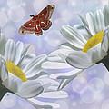 Nights In White Silk 2 by Barbara St Jean