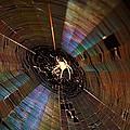 Nighttime Spider Web by Kathryn Meyer