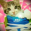 Nike Kitten by Alexandria Johnson