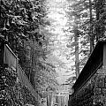 Nikko Pathway And Fog by Ronald Steiner