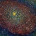 Nimoy Nebula by Amelie Simmons