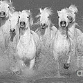 Nine White Horses Run by Carol Walker
