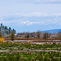 Nisqually Delta Of The Nisqually National Wildlife Refuge by Tikvah's Hope