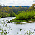 Nisqually River From The Nisqually National Wildlife Refuge by Tikvah's Hope