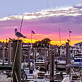 Nj's Sunset by Zina Stromberg