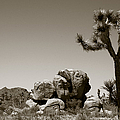 Joshua Tree National Park Landscape No 4 In Sepia  by Ben and Raisa Gertsberg