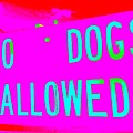 No Dogs Allowed by Ed Weidman