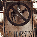 No Horses by Lynn Sprowl