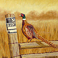 No Hunting   Pheasant by Tom Chapman