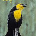 Yellow-headed Blackbird Singing by Patti Deters