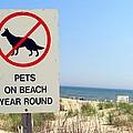 No Pets by Ed Weidman