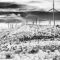 No Place Like Home 1 Bw Palm Springs by William Dey
