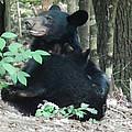 Bear - Cubs - Mother Nursing by Jan Dappen