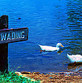 No Wading by Marie Hicks